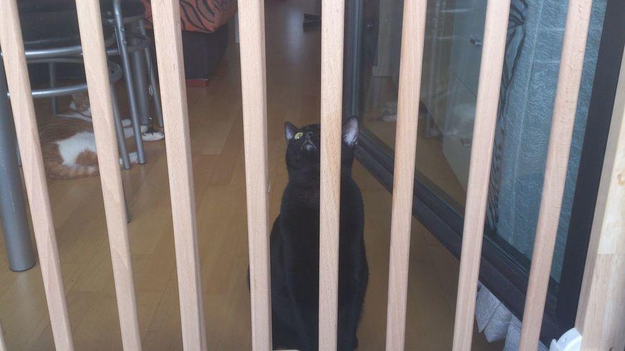 meuuwww a ver como salgo yo de aquí Gatos Gato Negro Gatitos Cats