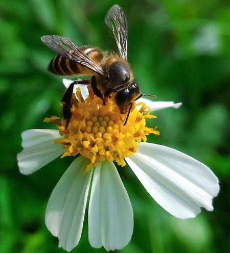 Macro Beeandflower Flower Nature Nature Photography Morning Leaf Bee Honey HoneyBee Paint The Town Yellow