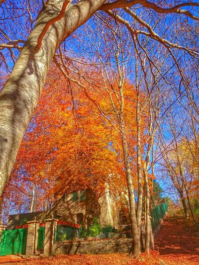 Montseny Santa Fe Del Montseny Autumn Autumn Colors Autumn Leaves Autumn🍁🍁🍁 Nature Nature_collection Leaves Fall Leaves EyeEm Best Shots EyeEm Nature Lover EyeEmBestPics EyeEm