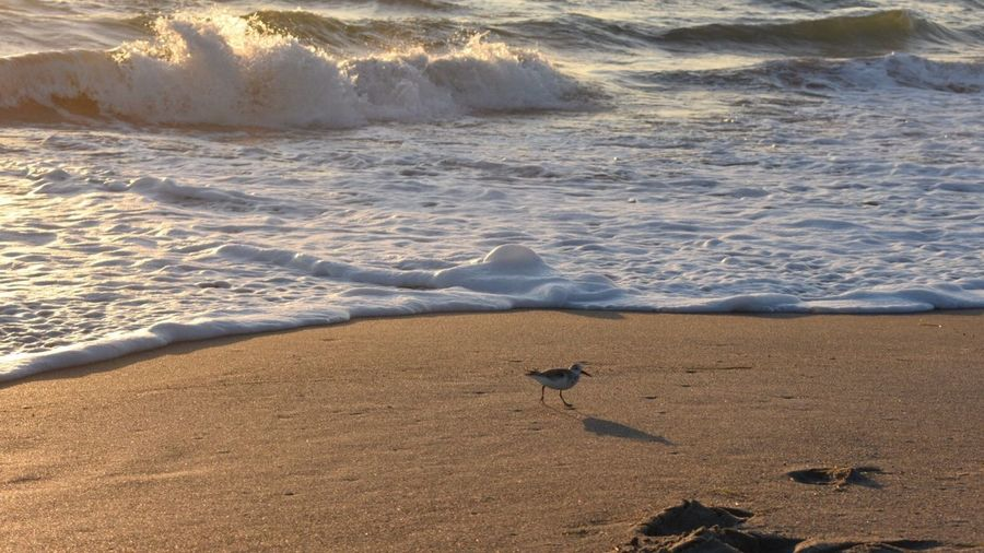 Running from the water Shadow Crashing Waves  Foamy Water Ocean Bird At The Beach Lone Bird Sand Nature Beach Sea Beauty In Nature Outdoors Water Day No People Power In Nature Scenics Wave
