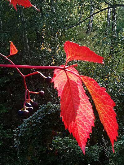 Nature Дыхание осени... Flower