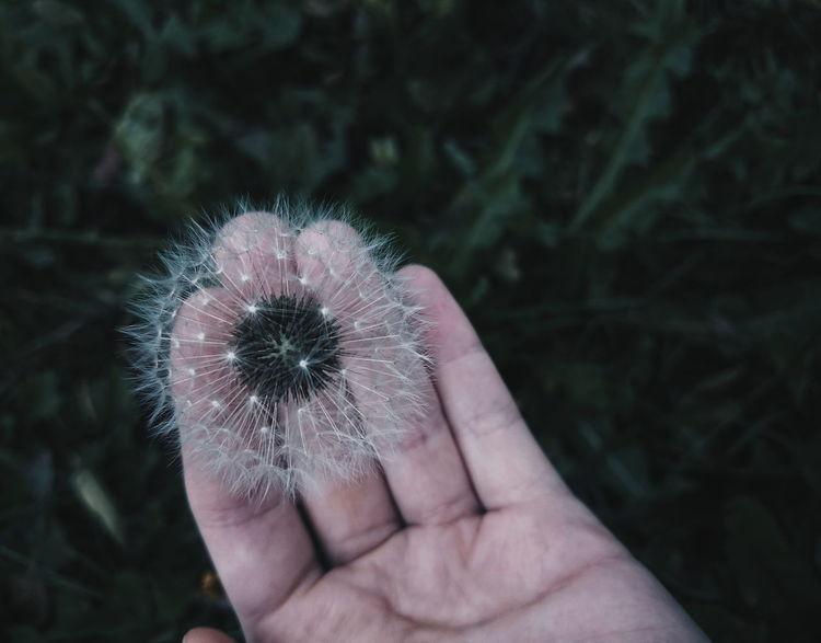 #eyembestshot #Hand #sony #xperia Nature_collection #eyeemnaturelover #nature