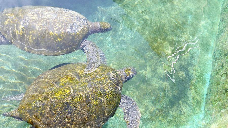 Turtles Hello World Enjoying Life Water Blue Nice Friends Romantic EyeEm Sweet