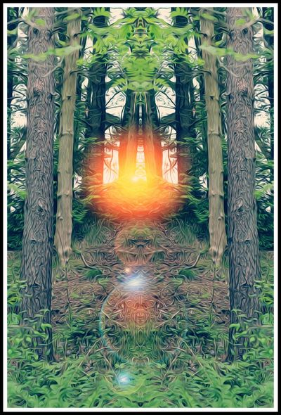 mirrored forest Eyeem Undiscovered Forest Photography LenseFlare No People Outdoors Nature Day Tree Growth Grass