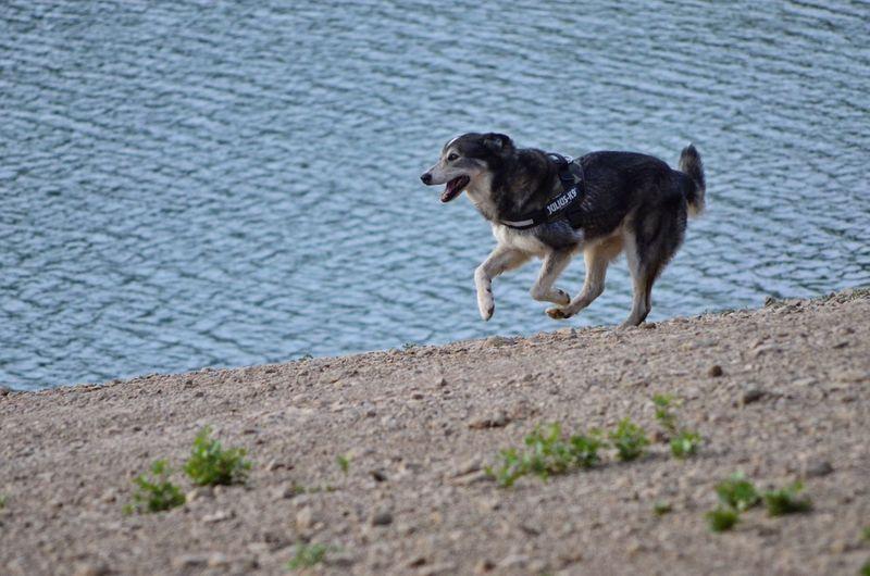 Husky River One