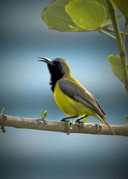 Bird Bird Photography Birdwatching EyeEm Birds Birdfreaks Bird Watching Birding Bird Singing