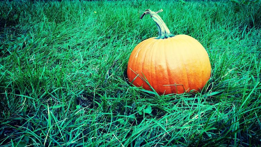 Outdoors Day Green Color No People Nature Nature Beauty In Nature Halloween Pumpkins