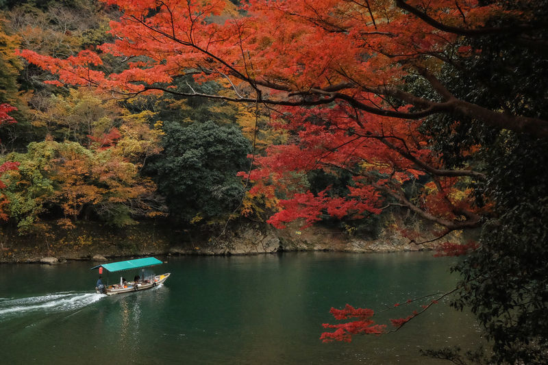 Scenic view of river by trees during autumn in arashiyama