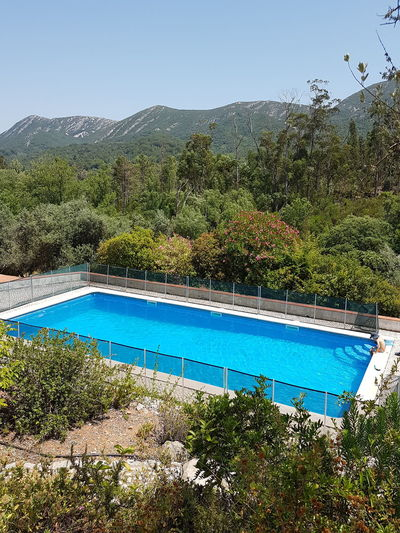 Swimming pool by trees against clear blue sky
