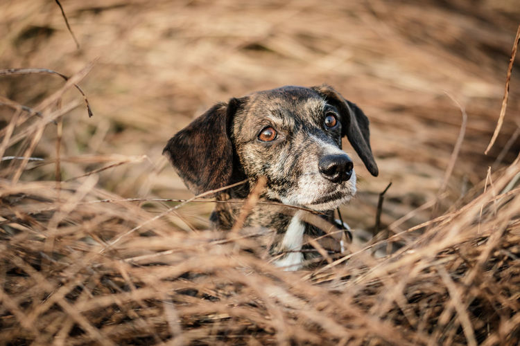 Little brown dog hiding in the gras Pet Photography  Animal Themes Brown Dog Close-up Day Dog Dog Photography Dog Portrait Domestic Animals Field Grass Hidding Little Dog Mammal Nature No People One Animal Outdoors Pets Portrait Sausage Dog