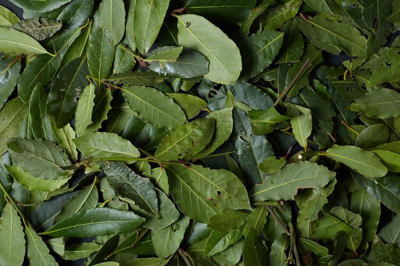 Full Frame Shot Of Bay Leaves