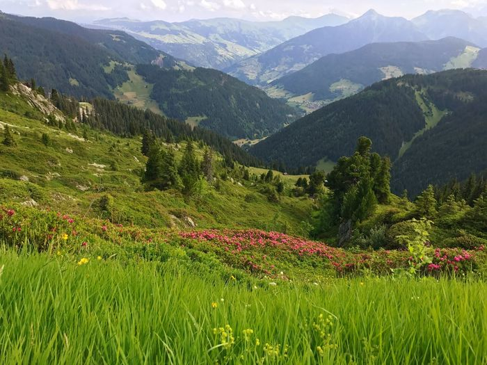 France Alps Clover Wildflower Meadow Mountain Nature Beauty In Nature Scenics Mountain Range Growth Grass Flower Outdoors Landscape Day Tranquil Scene Tranquility Beauty Plant No People Green Color
