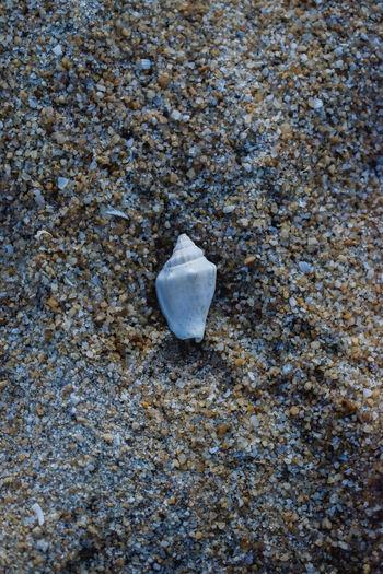Beach Land Sand