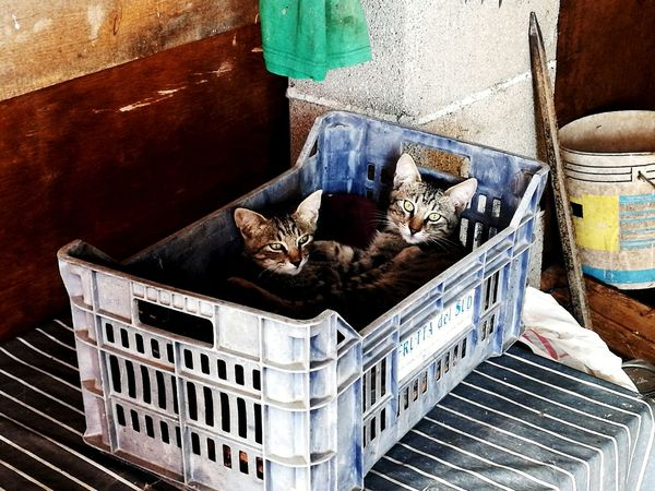 Cats Pet Portraits