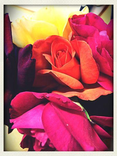 Flower Rose Porn