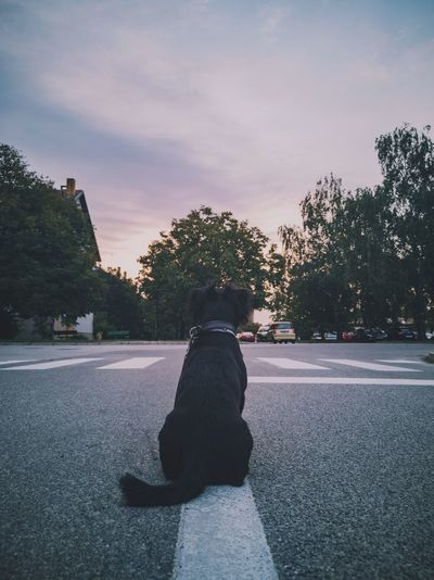 When I see this photo all I can think of is hope and bravery Huawei P20 Pro Huawei Love Walking Sun Relaxing Sunrise Domestic Animals Puppy Streetphotography Be Brave Tree Pets Winter Dog Cold Temperature Snow Full Length Shadow Rear View Sunbeam Outline Street Scene Friend The Mobile Photographer - 2019 EyeEm Awards