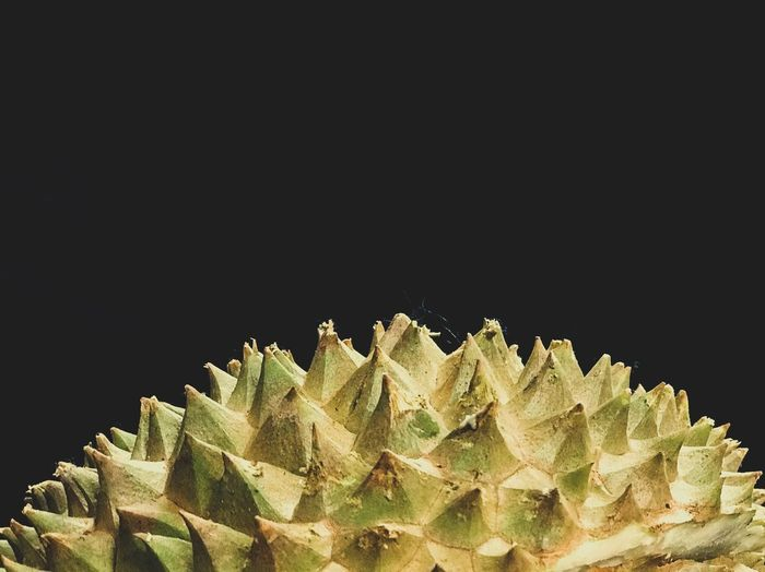 King of fruits #Durian Flatlay Minimal Fruits Durians Fruit Durian Studio Shot Black Background Spiked No People Close-up Beauty In Nature Outdoors Freshness Day
