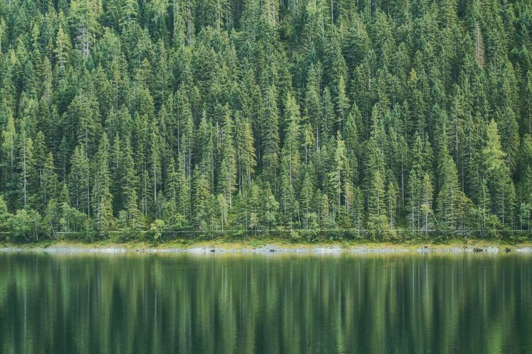 Green Color Nature Full Frame Backgrounds No People Tree Plant Beauty In Nature Growth Day Water Scenics Outdoors Freshness Sky Sunlight Forest Wanderlust Reflection in Gosau, Austria Lost In The Landscape Perspectives On Nature