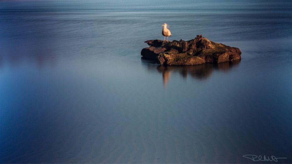 Lincoln City, Oregon Seagulls Seagulls And Sea Seagull Serenity EyeEm Nature Lover