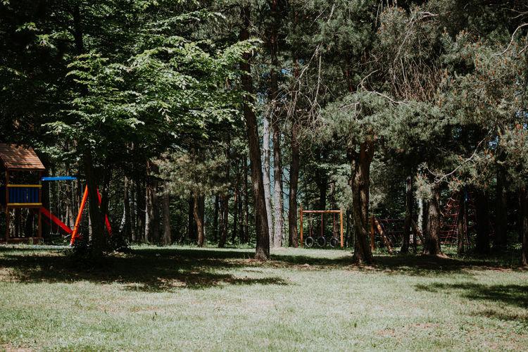 Trees growing on field in park