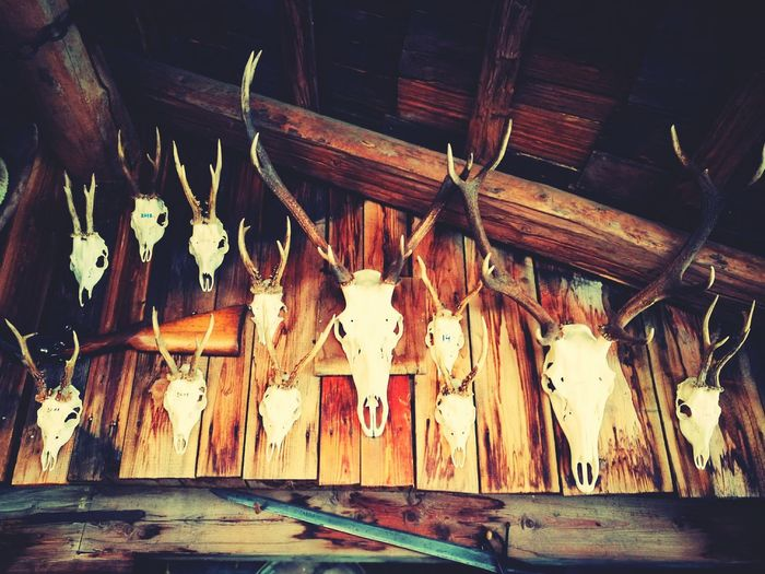 Indoors  No People Art EyeEmNewHere Large Group Of Objects In A Row Nature Animal Head  Trophy Deer Trophy Wood Chalet Chase Antlers On Wall Antler Lieblingsteil