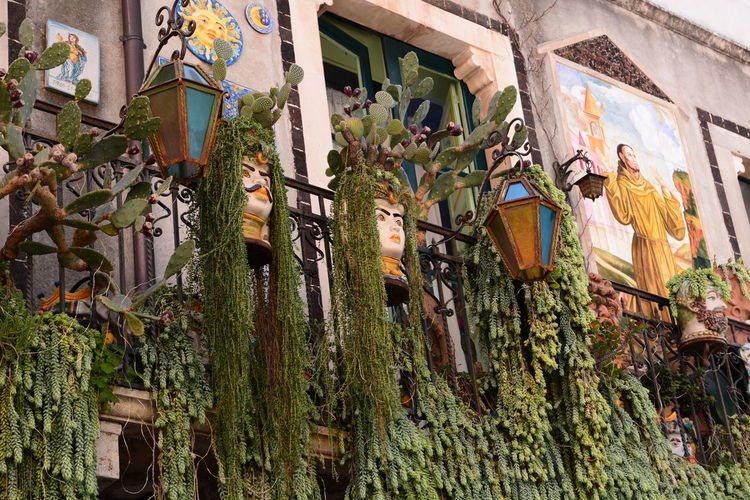 Low angle view of plants hanging by building