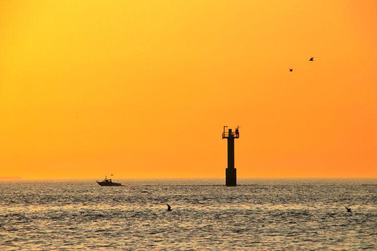 Seagull flying over sea against orange sky