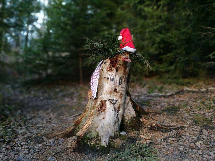 Tree Nature Outdoors No People Chrisrmas Christmas Tree