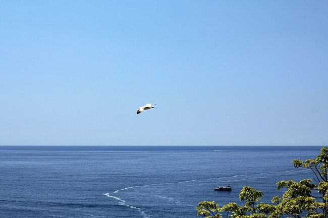 A solitary seagull. Fly Freedom Animal Themes Animal Wildlife Animals In The Wild Beauty In Nature Bird Blue Clear Sky Day Flying Flying Bird Flying In The Sky Horizon Over Water Nature No People One Animal Outdoors Scenics Sea Seagull Sky Spread Wings Tranquil Scene Water