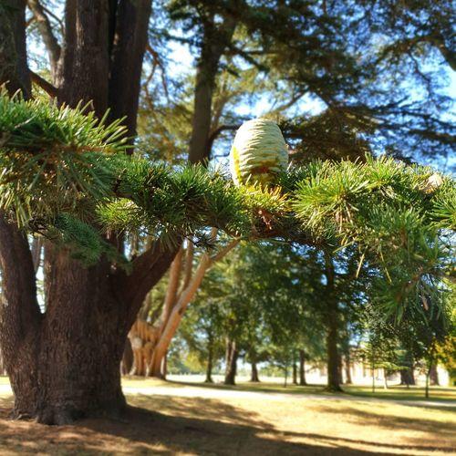 Tree Bird Tree