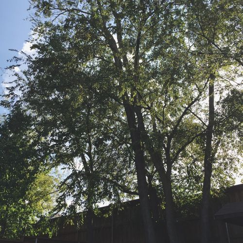 Tree Love TreePorn Tree And Sky