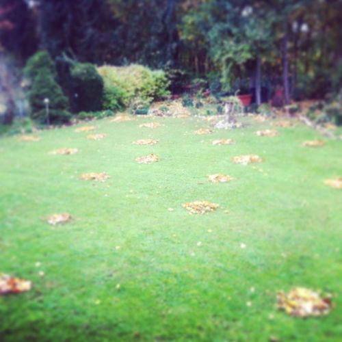 What Does Freedom Mean To You? .. City Escape Time to hang in the garden making 40 or so heaps of autumn leaves.