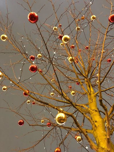 Low angle view of illuminated tree against sky