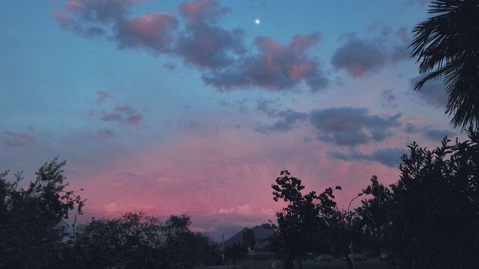 Tramontorosso Tramontoitaliano Tramonto Bellissimo Sunset Light Blue Sunset Red Sunset Above Trees Tramonto Blu Tramonto Rosso Tramonto Rosso E Blu Tramonto Nuvoloso Cloudy Sunset Red And Blue Sunset Sunsetporn Low Angle View Tranquility Tranquil Scene Silhouette Scenics