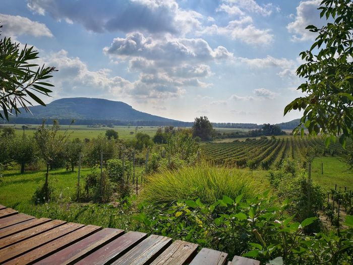 Cloud - Sky Field Growth Nature Green Color No People Outdoors Freshness Badacsony Wineyard Been There.