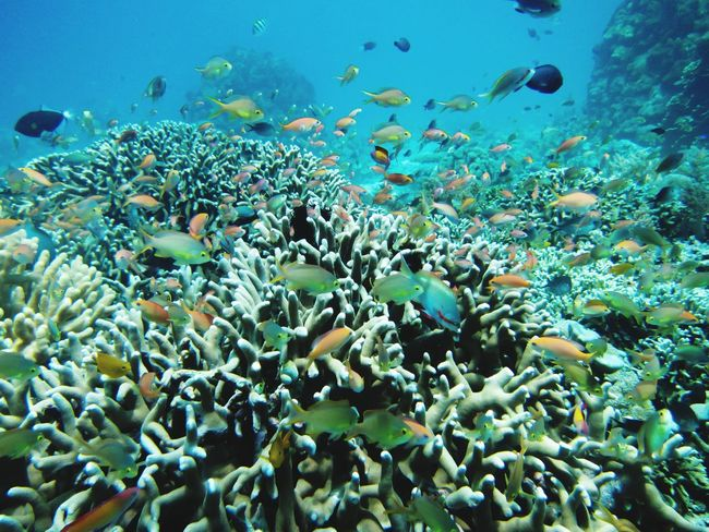 EyeEm Selects UnderSea Sea Life Scuba Diving Water Sea Underwater Swimming Multi Colored Colony Coral