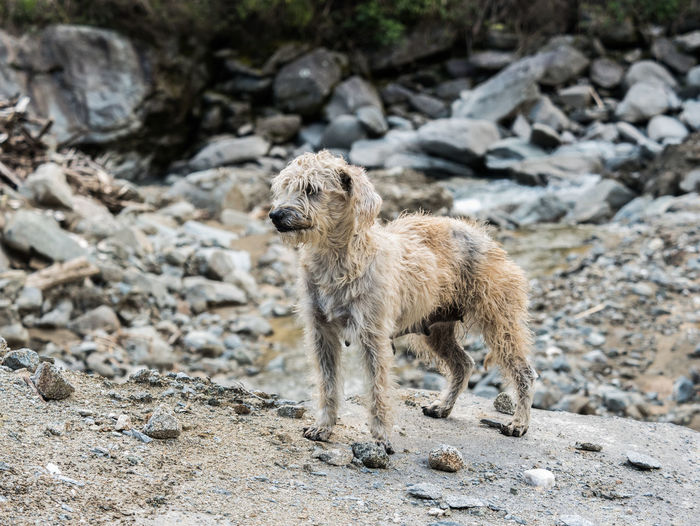 A scruffy stray dog in Ecuador. Animal Themes Animal Mammal One Animal Vertebrate No People Day Stray Dog Ragged Unkempt Lost Canine Dog Cute Pet