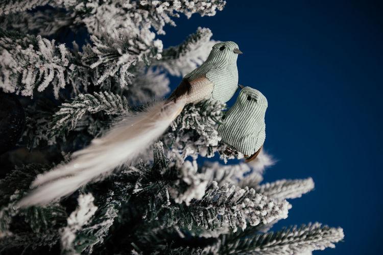 Close-up of seashell on tree against blue sky