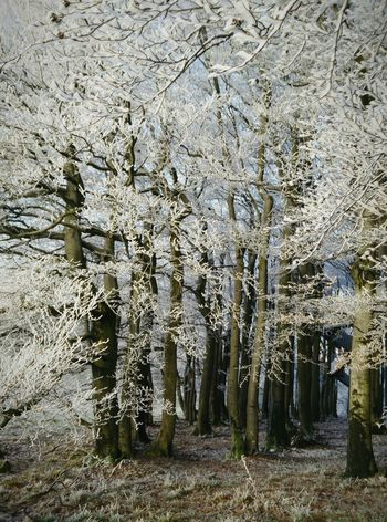 Ho ho ho! Winter Frosty Trees Deepfreeze Landscapes With WhiteWall
