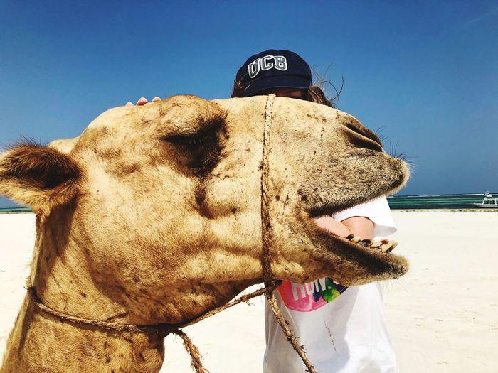 EyeEm Selects Domestic Animals Animal Themes Mammal One Animal Horse Day