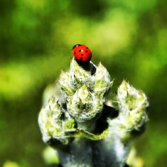 Böcük Doğa çiçek Uğur şans