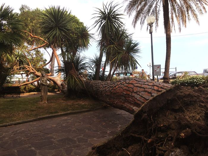 City Tree Exterior Outdoors Palm Tree Tree Tree Trunk No People Growth Beach Nature Sky Beauty In Nature Sea Coconut