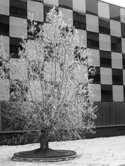 Architecture Black And White Black And White Photography Blackandwhite Blackandwhite Photography Building Exterior Built Structure Day Nature No People Outdoors Sky Tree Whitefrost Whitefrosting