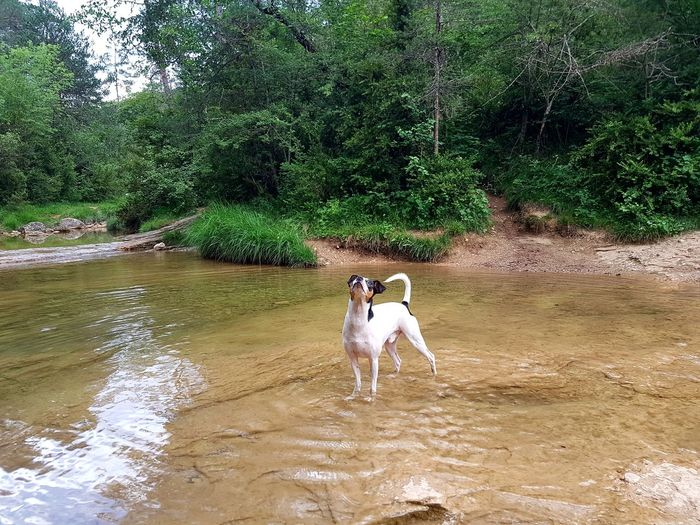 Orgullo perruno. Dog Domestic Animals Naturelovers Dog Lover DogLove Dog Love Dogs Of EyeEm Dog Life Dogslife Be. Ready.