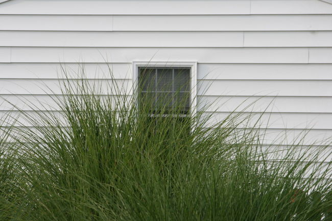 Architecture Building Exterior Built Structure Close-up Day Grass No Filters Or Effects No People Outdoors Tall Grass Tall Grasses White Siding Window Windows