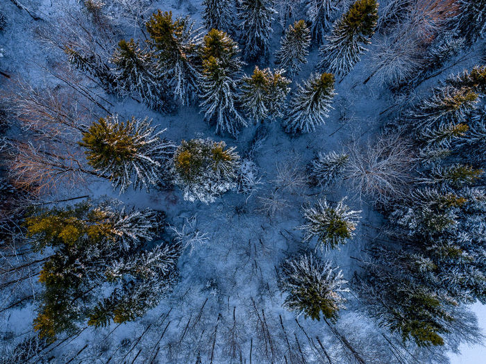 Winter sunset Aerial View Aerial Shot Aerial Photography Drone  Top Down View Huddinge Sweden Beauty In Nature Close-up Cold Temperature Day Growth High Angle View Nature No People Outdoors Pine Tree Sky Snow Sweden Nature Tree Winter