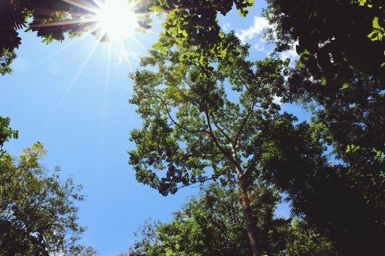 Little Sunshine.☀️