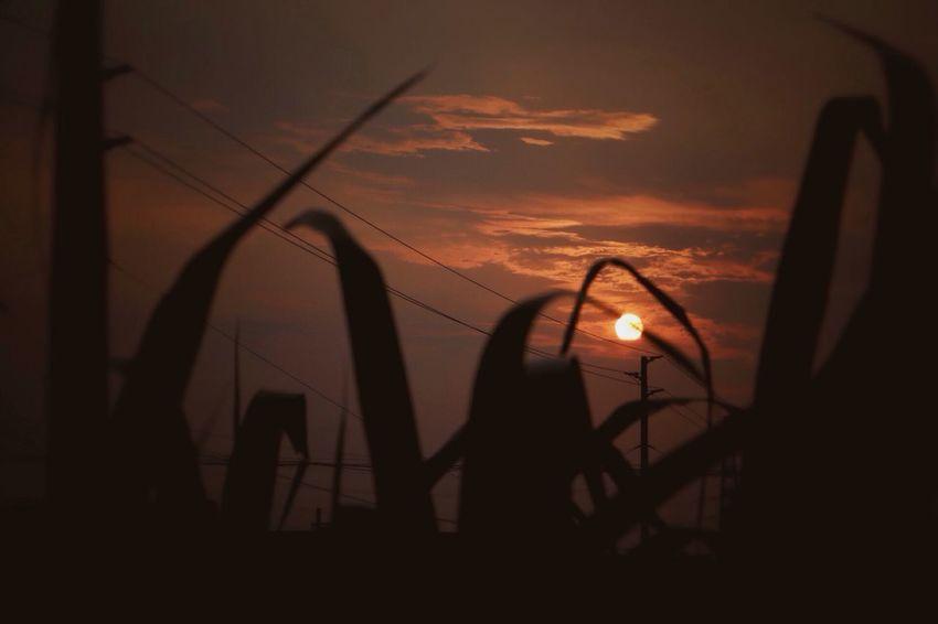 Sunset in my hometown Hi! Enjoying Life