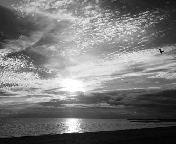 Fly away Sea Water Nature Sky Tranquil Scene Horizon Over Water Scenics Tranquility Cloud - Sky Beauty In Nature Sunset Beach Sun Sunlight No People Outdoors Silhouette Flying Day Bird
