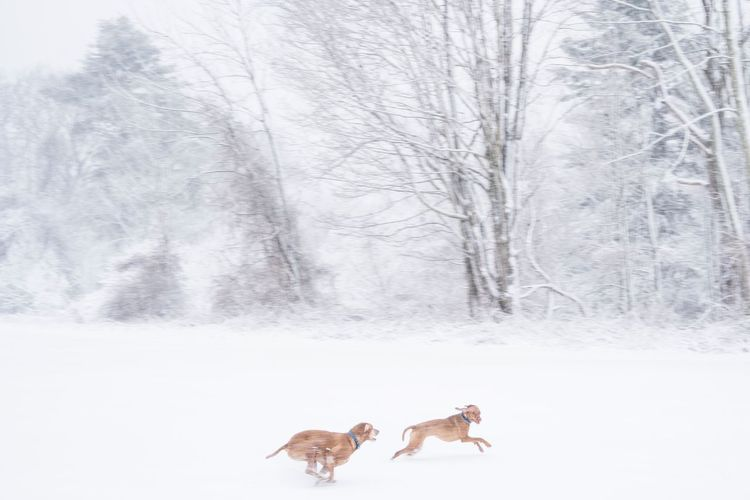 Snow Day Beauty In Nature Weather Winter Snow dogs Dogs Of EyeEm Dogslife Dogs Play Viszla